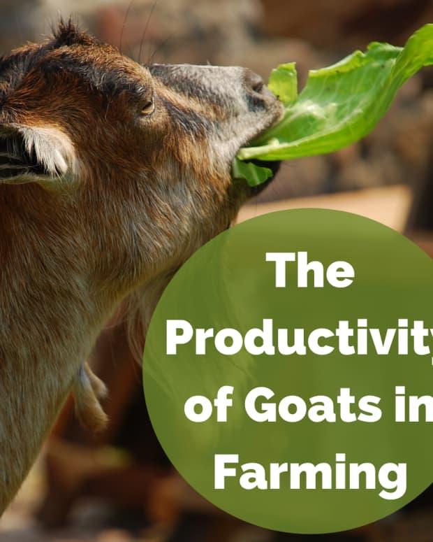 goats-in-farming