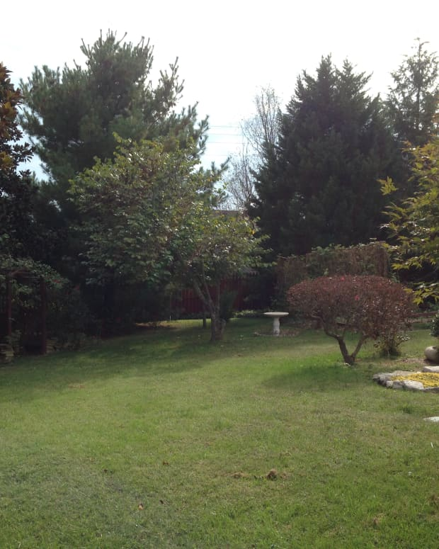 original-poem-autumn-in-our-backyard-with-commentary
