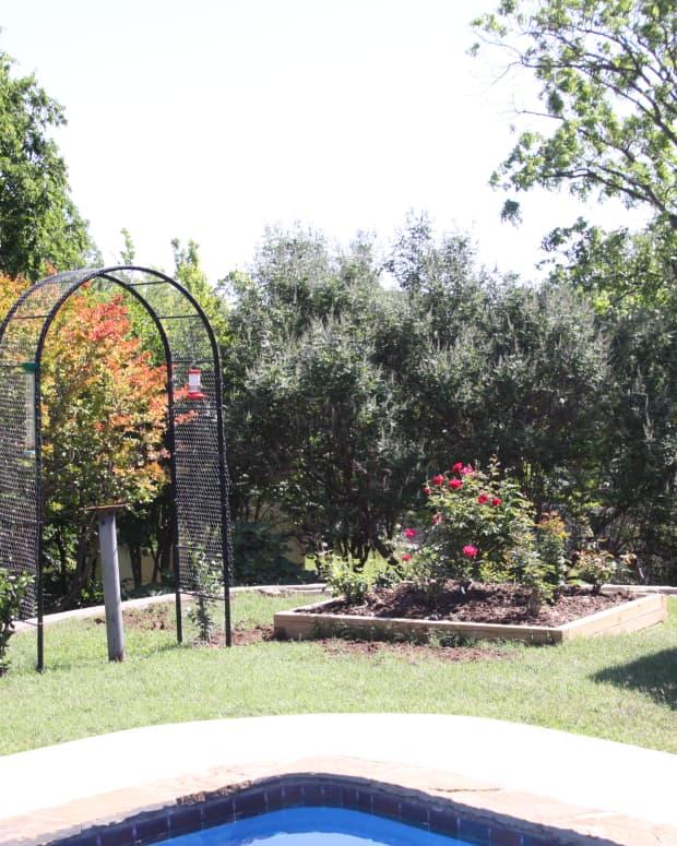 my-summer-garden