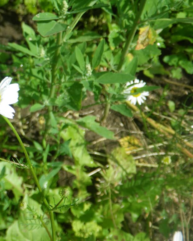 lovely-wildflower