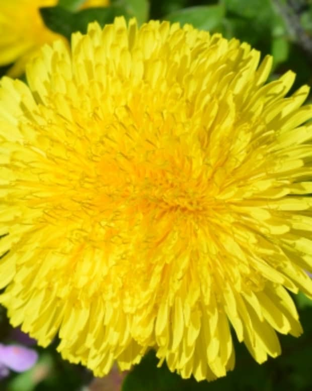 a-guide-to-herbs-and-plants-with-healing-properties