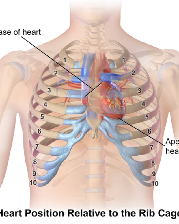 replacing-dead-tissue-after-heart-attacks-possible-solutions