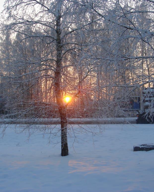 in-a-winter-wonderland