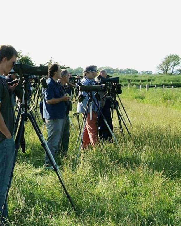 birding-the-complete-guide-to-twitching