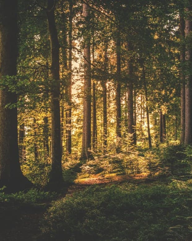 the-secrets-of-the-forest-written-by-adam-hwang