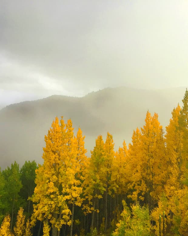 fall-in-the-wasatch-mountains-utah