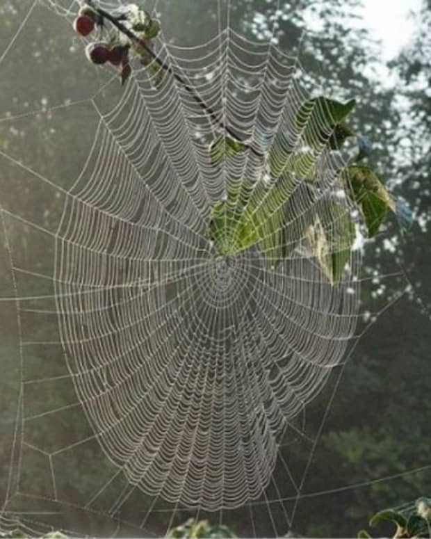 poetical-encounter-with-a-spider