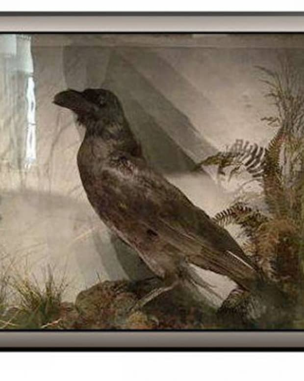 the-raven-my-way