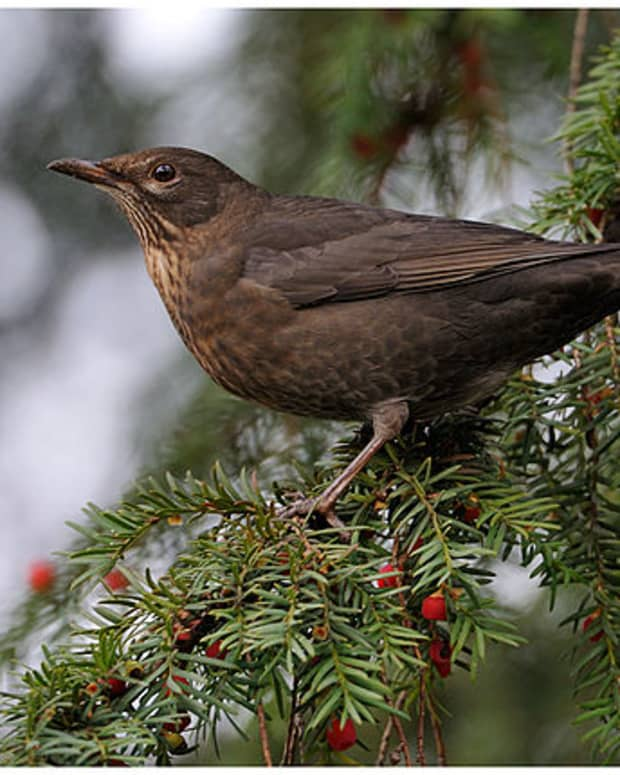 faithful-blackbird-and-sweet-princess