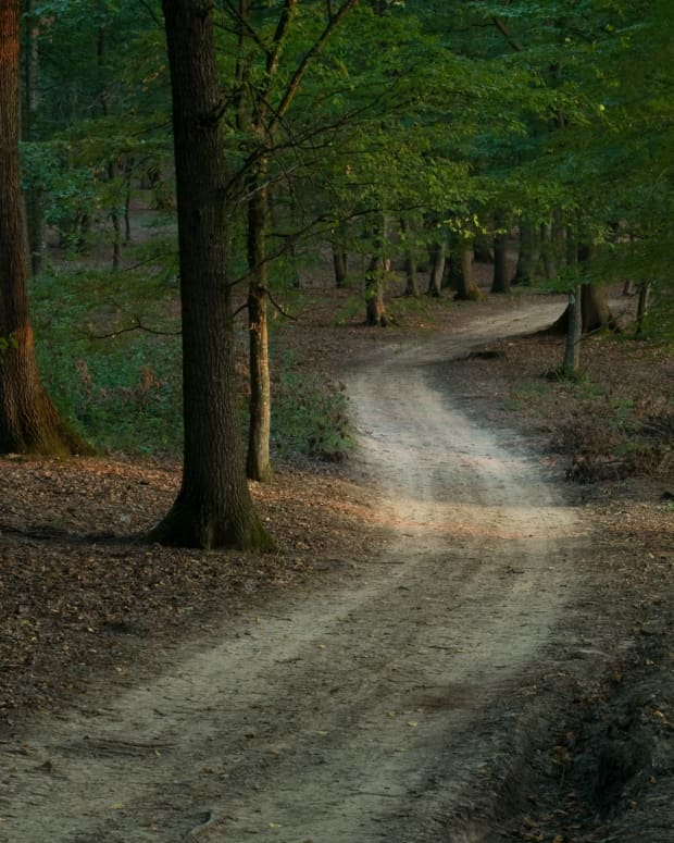 a-road-through-the-forest-a-fable