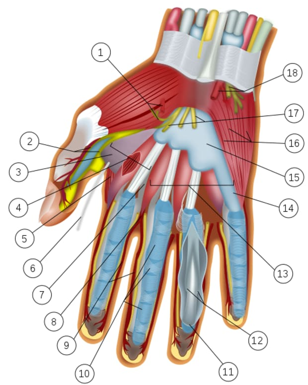 carpal-tunnel-syndrome-during-pregnancy