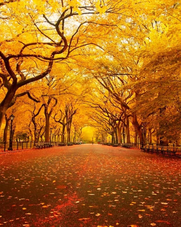 forever-autumn-a-short-story