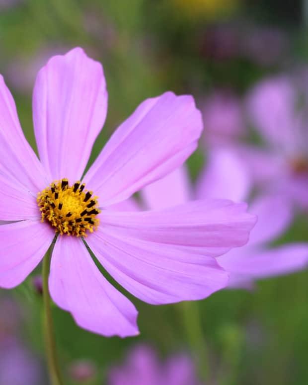 summer-flowers-growing-in-a-church-garden-a-photo-essay