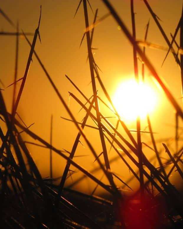 beautiful-sunshine