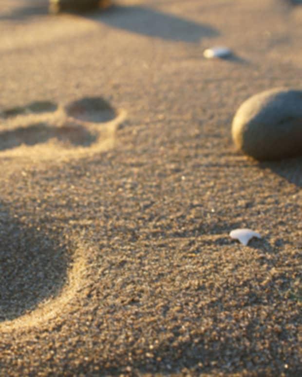 footprints-by-ariel-madrid