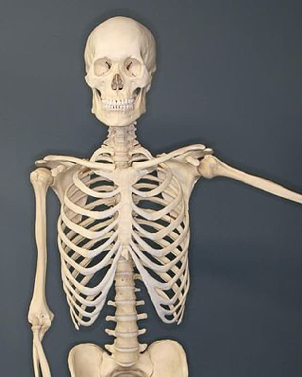 me-and-sal-the-skeleton