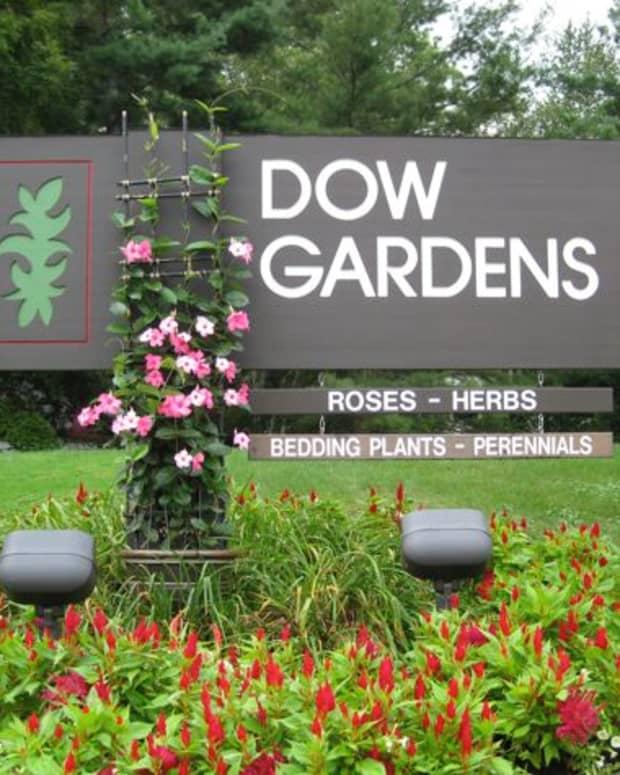 butterfly-exhibit-dow-gardens-in-midland-michigan