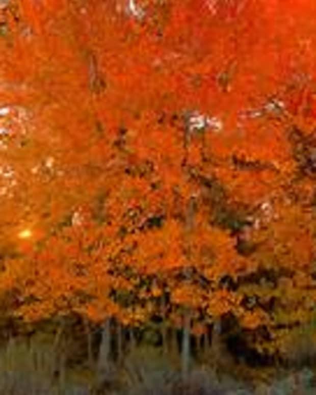 autumn-limericks