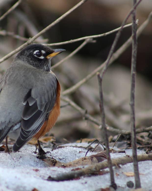 winter-birds-in-kingston-ontario-a-photo-essay