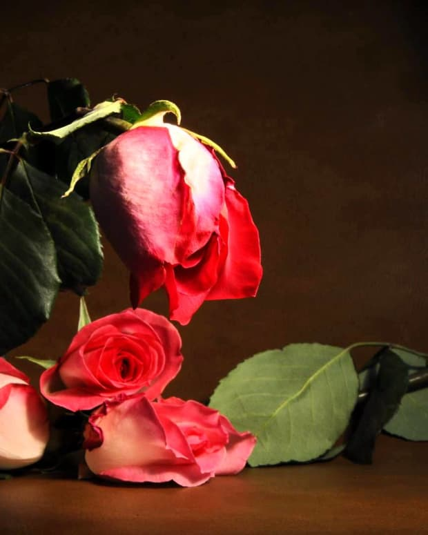 a-rose-and-its-thorns-a-short-story