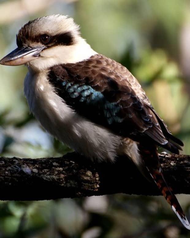 short-story-bird-call