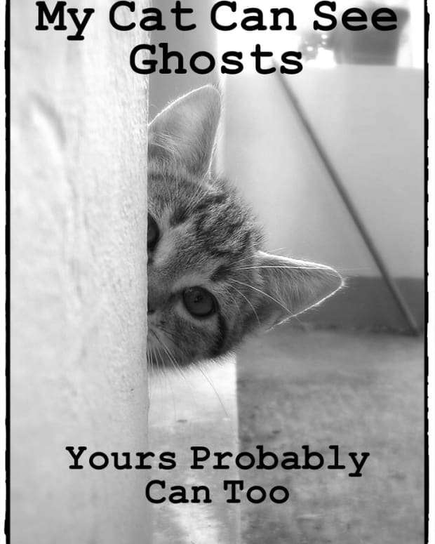 can-dogs-and-cats-see-ghosts