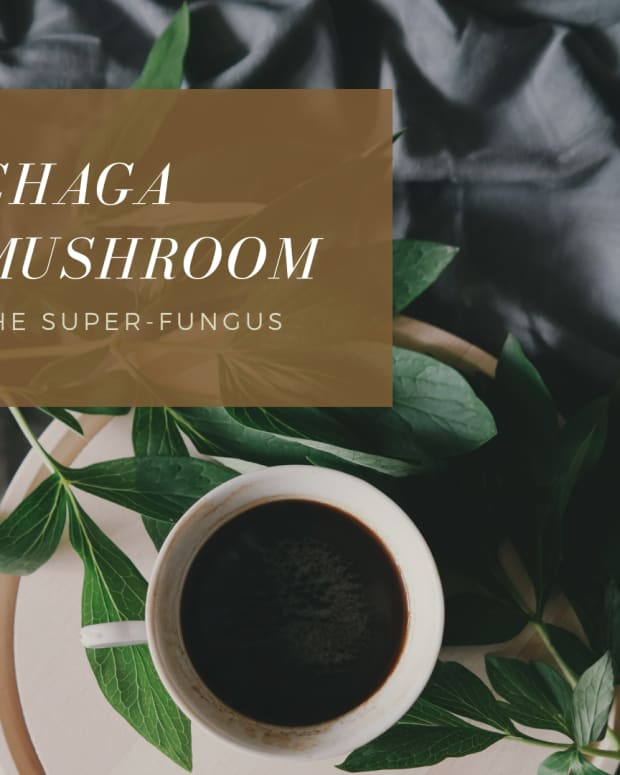 the-health-benefits-of-chaga-mushroom-superfood-elixirs