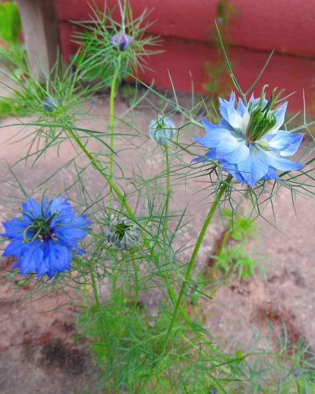 the-health-benefits-of-black-cumin-seeds