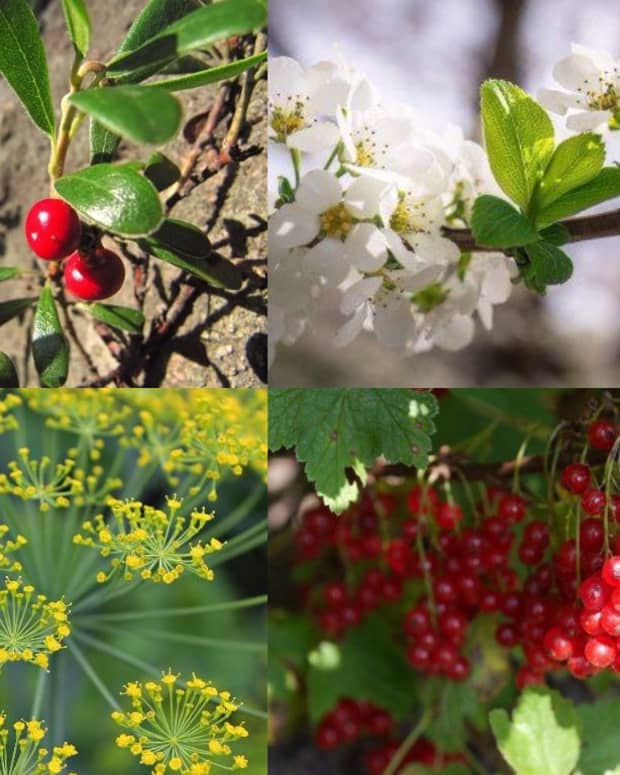 herbs-for-urinary-tract-infections-uti