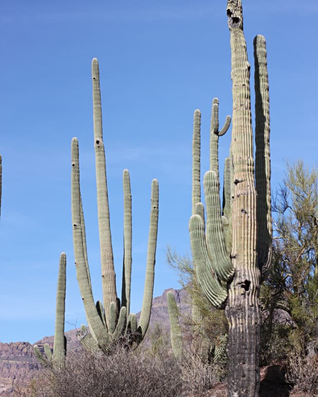 arizona-hiking-safety-tips-and-resources