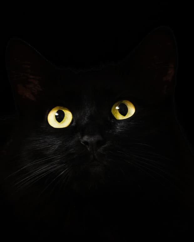 the-black-cat-a-100-word-microfiction-short-story