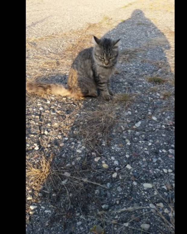 minnesota-musing-cat-people-how-to-identify-if-you-are-one-of-them