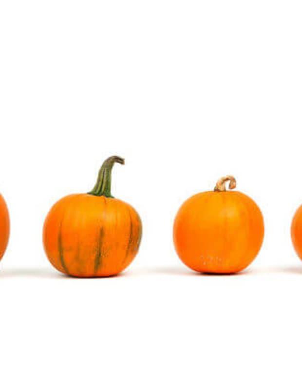 reasons-to-eat-pumpkin-no-matter-the-season
