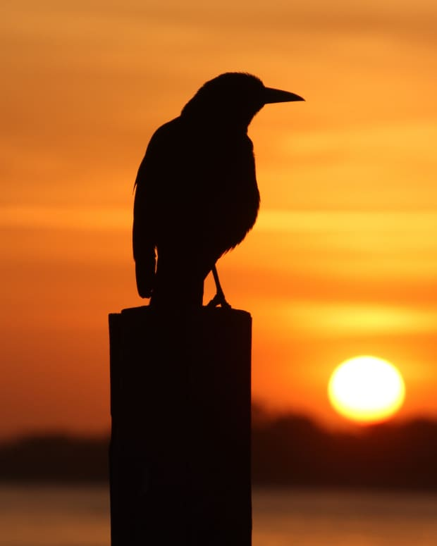 13-bible-verses-about-birds-and-their-meanings