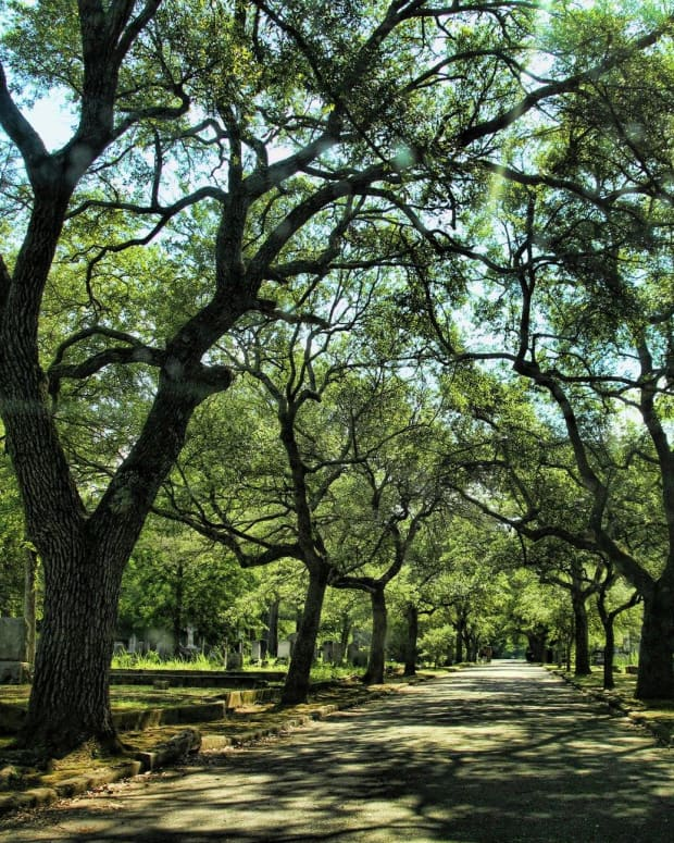 trees-in-poetry-last-breath-of-a-forest