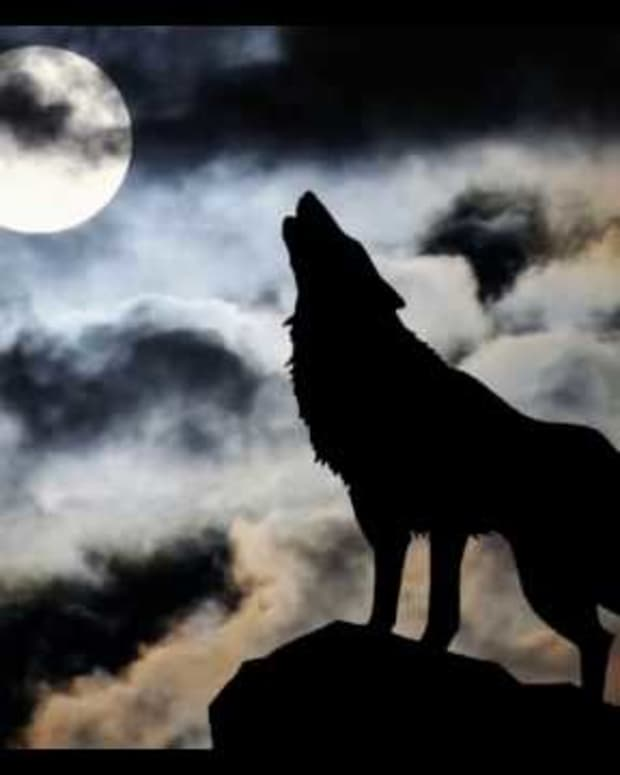 song-of-the-wolves