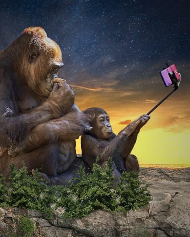 the-ten-most-tragic-selfie-deaths