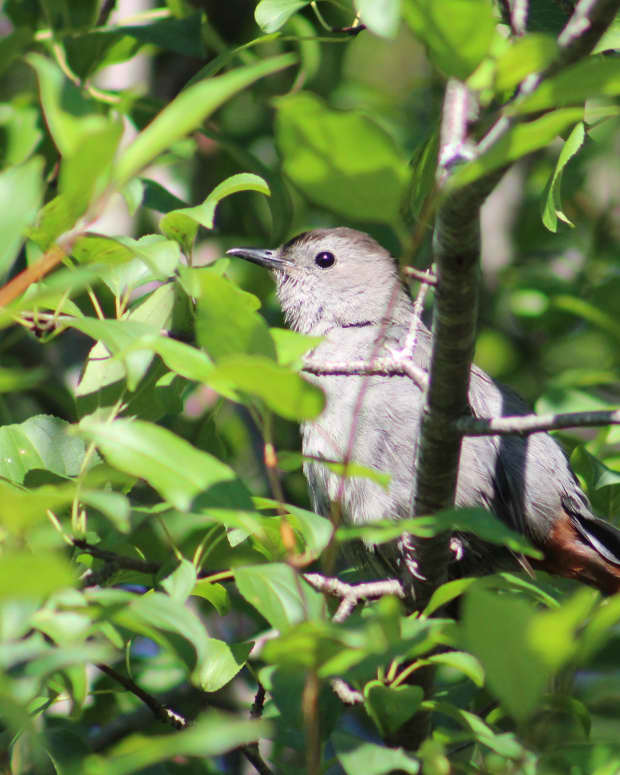 summer-birds-in-kingston-ontario-a-photo-essay
