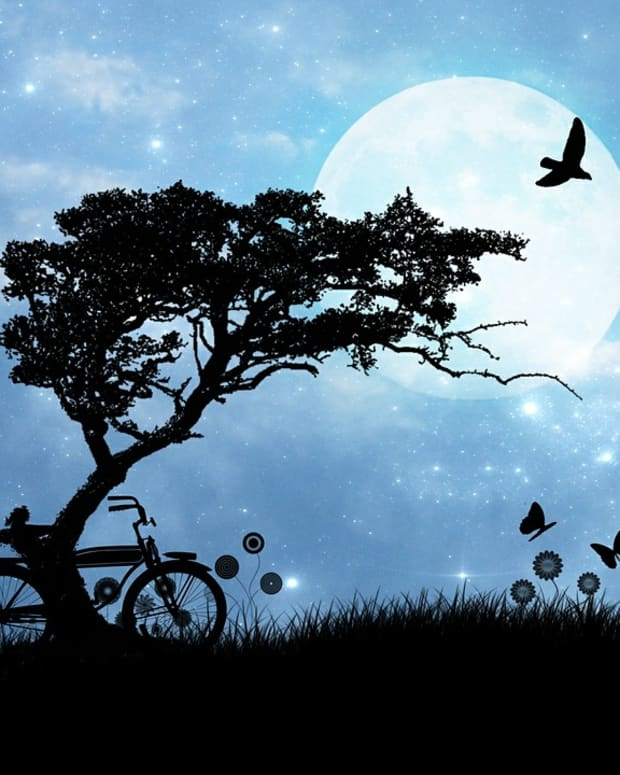 nocturnal-passion-a-love-poem