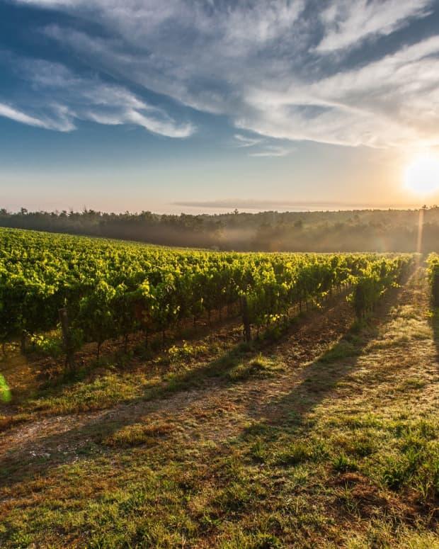 5-of-the-best-wineries-to-visit-in-beamsville-ontario