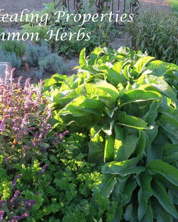 healing-properties-of-common-herbs