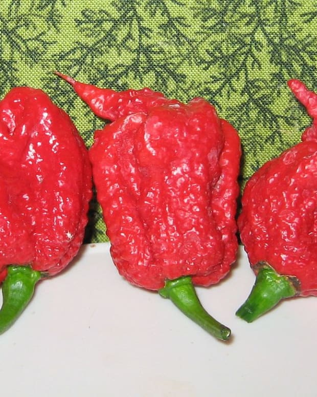 capsaicin-piperine-gingerol-and-allicin-add-spice-to-our-food-are-there-similarities-in-their-health-benefits