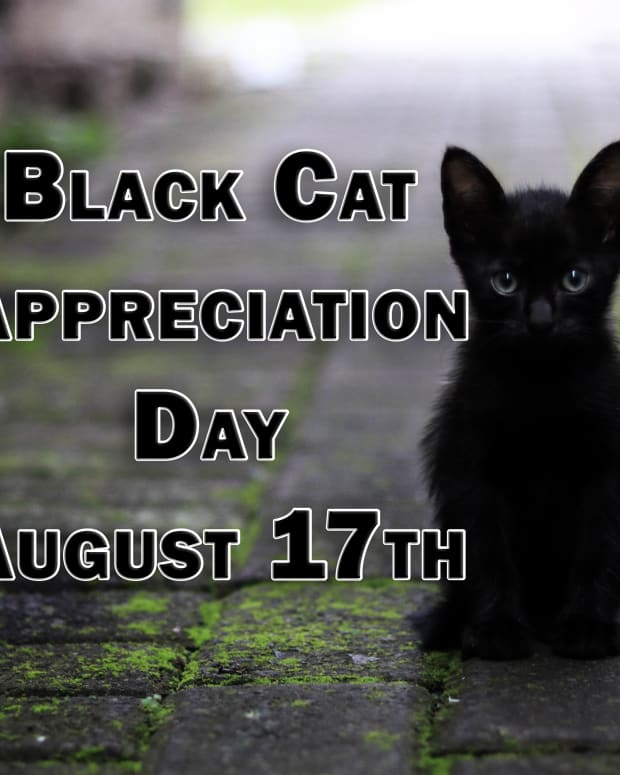 why-you-should-celebrate-black-cat-appreciation-day-on-august-17th
