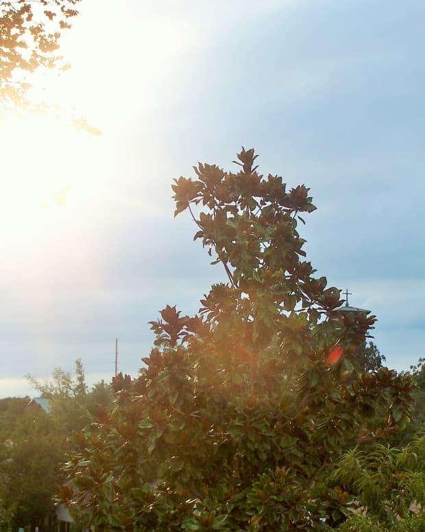 days-of-sunshine-nights-of-shadow