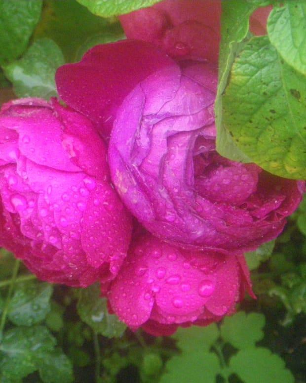 raining-in-her-heart