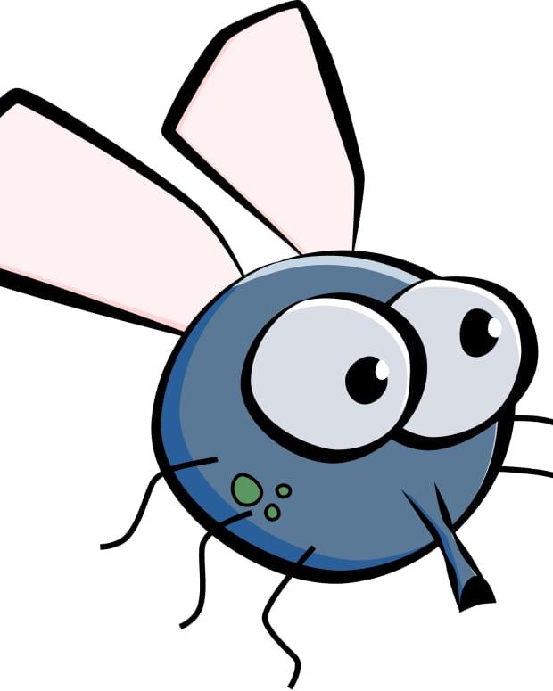 blow-fly-a-miniscule-poem