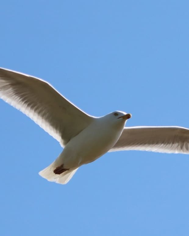 special-bird