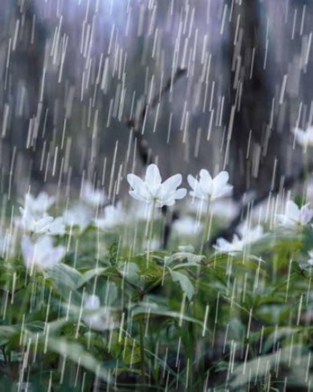 the-downpour