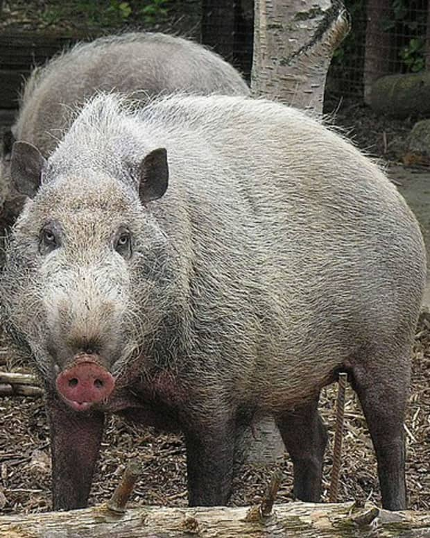 time-to-talk-about-hog-heaven-and-other-questions-about-life
