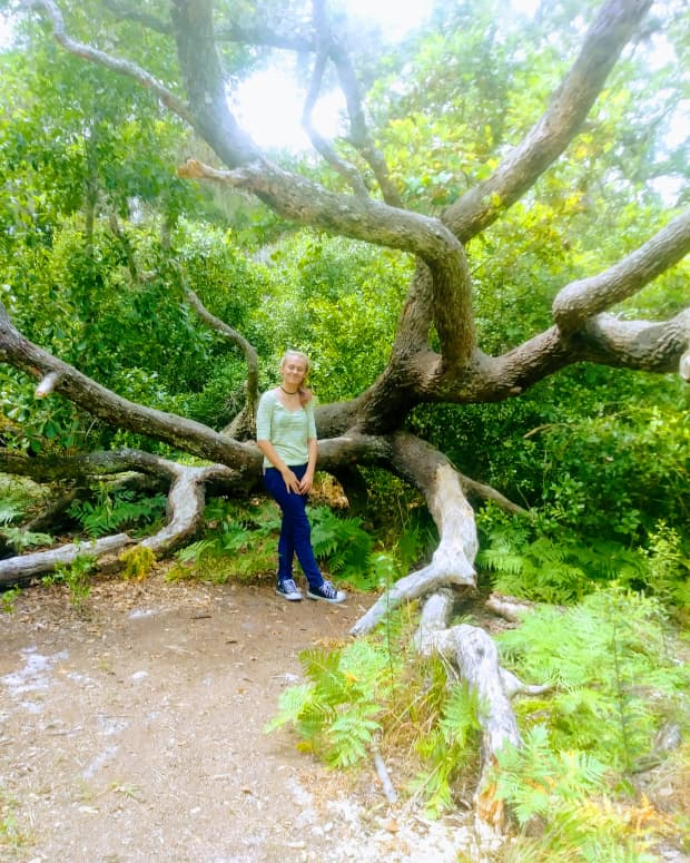 tree-of-life-symbolic-poem